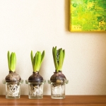 Tonputzwand von Emoton in Creme mit Blumenzwiebeln im Glas