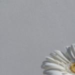 Tonputzwand von Emoton in fein geglättetem Weiss