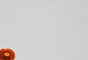 AREA fein Weiß - Großflächentechnik 1