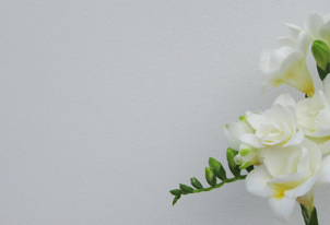 AREA fein Weiß - gefilzt 3