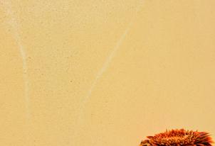 AREA fein verpresst - Farbton Ocra dunkel 3