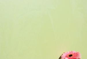 STUCCO glatt verpresst - Farbton Primavera dunkel 1
