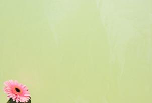 STUCCO glatt verpresst - Farbton Primavera dunkel 2
