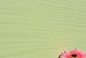 STUCCO quer Relief - Farbton Primavera dunkel 1