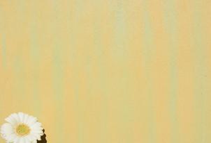 STUCCO zweifarbig verpresst - Farbton Ocra und Primavera 2